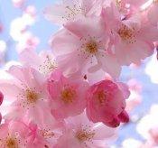 30 марта по народному календарю праздник Теплого Алексея