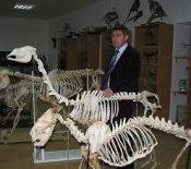 В музее нормальной и патологической анатомии животных агроуниверситета Днепропетровска появился уникальный экспонат