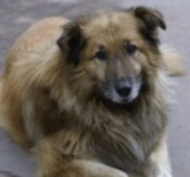 В Днепропетровске зарегистрирована городская общественная организация защиты животных «Верность»