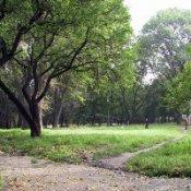 В парке имени Володи Дубинина появились новые деревья