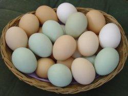 Куриные яйца стали значительно полезней для здоровья человека, чем раньше